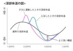 深部体温の図